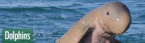 sp_header_dolphins_808x240_18720