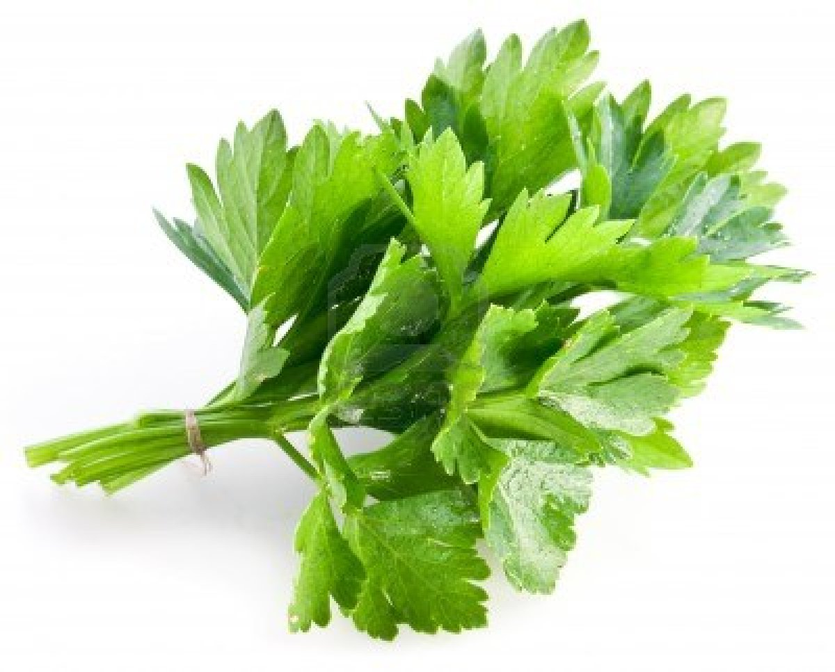 14040057-bunch-of-green-coriander-on-a-white-background