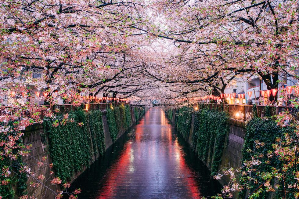 gallery-1449605520-meguro-river-tokyo-getty